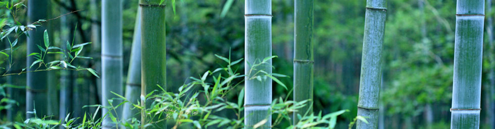 natural balance acupuncture